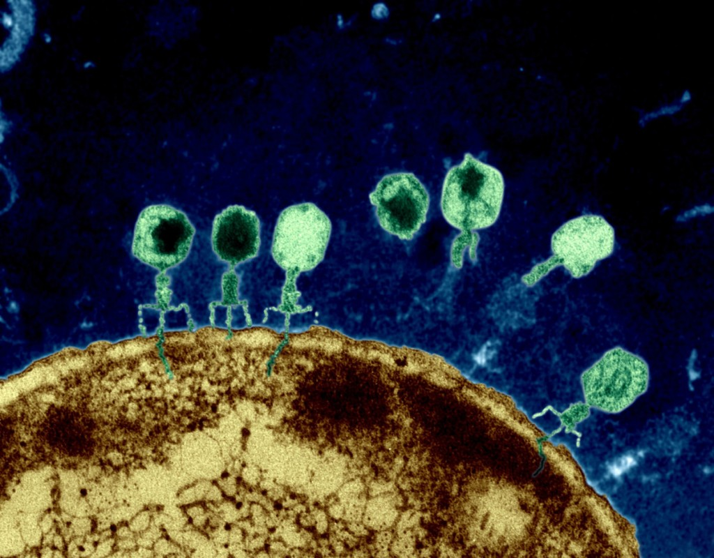 Twilley-phages-1200