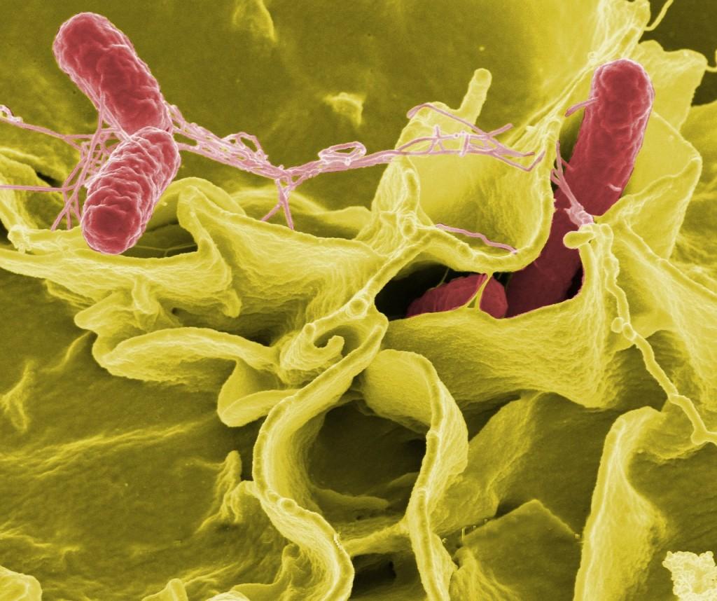 bacteria-67659_1280
