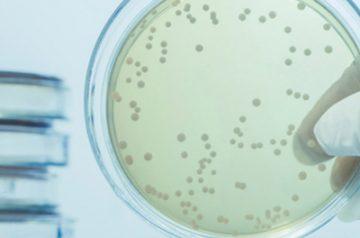 La resistencia a los antibióticos y la seguridad de los alimentos