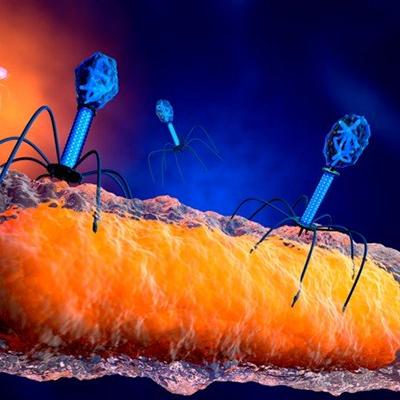 Condiciones de uso de los fagos para la reducción de niveles de patógenos en alimentos