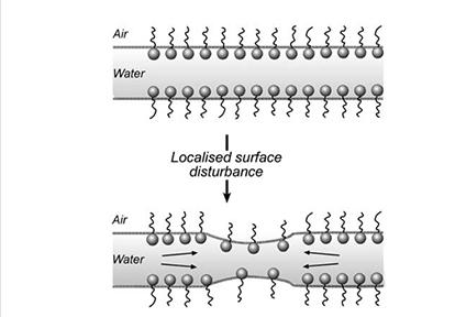 Figura 5: Efecto de la elasticidad producido al provocar una situación de estrés sobre una película delgada formada por una mezcla de aire, agua y tensioactivo. Fuente: Pugh, 2016.
