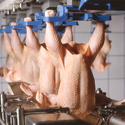 Limpieza y desinfección en instalaciones avícolas