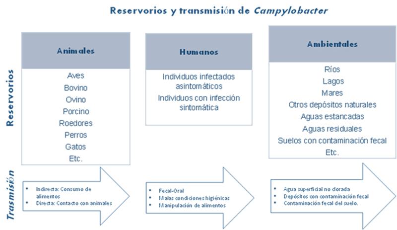 Figura 1. Reservorios y trasmisión de Campylobacter. Fuente: (Betelgeux 2015).