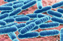 Microbiología del queso ¿todos los microorganismos que se encuentran en el queso son beneficiosos?